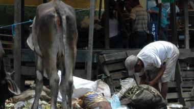 Una persona rebusca entre basura en el mercado de granos de Barranquilla.