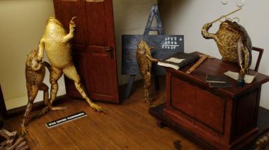 'Froggyland', el museo protagonizado por ranas