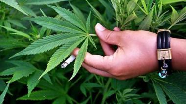 Hoy se celebra el 420, día internacional de la marihuana
