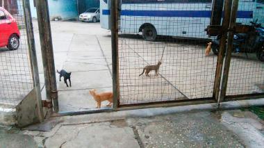 'Hay gato encerrado'  en la cárcel La Vega