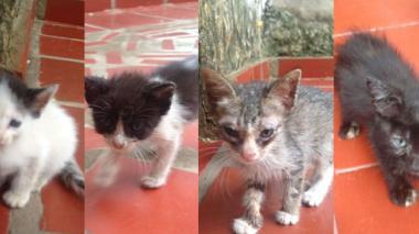 4 de los 11 gatitos que buscan hogar.