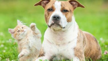 El Animalatón busca ayudar a perros y gatos en estado de vulnerabilidad.