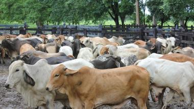 Venezuela prohíbe el ingreso de carne colombiana