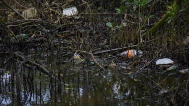 En video   Manglares, un ecosistema que peligra