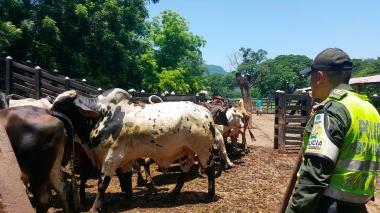 Autoridades controlan la comercialización de ganado en el país. Imagen de referencia.