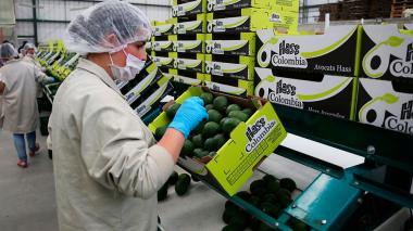 Exportar no está en la agenda de pymes: Acopi