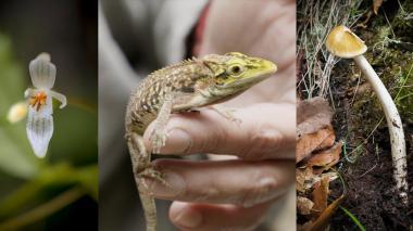 La Colombia biodiversa que se redescubre