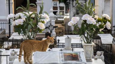 ¿Pacto con el diablo? Gatos cuidan tumbas en el cementerio de Mompox