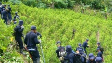 Colombia no logrará la meta de erradicación este año: DEA
