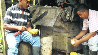 Sucre le apuesta a la agroindustria