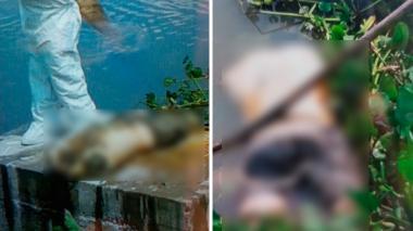 Hallan un cuerpo desmembrado cerca al puente Pumarejo