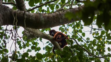 Acción humana, principal causa del deterioro de ecosistemas en la Costa