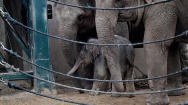 Irlanda prohíbe el uso de animales salvajes en circos