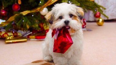"""Consejos para una Navidad """"a prueba de mascotas"""""""