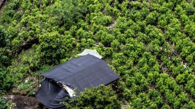 Superamos la meta de erradicación de cultivos ilícitos: mindefensa