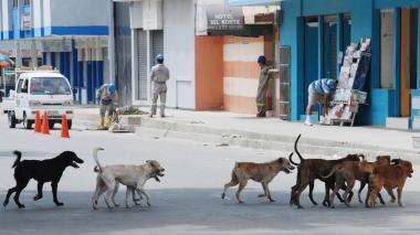 Perros callejeros pasean por el centro de B/quilla.