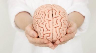 Hospital español crea un banco de cerebros para estudiar enfermedades