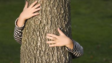 Cuidado con las orugas en los árboles frutales