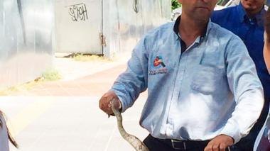 Serpientes, el otro problema de los habitantes de Caribe Verde