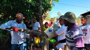 Insólito: familia tenía como mascota a caimán aguja en El Paso, Cesar