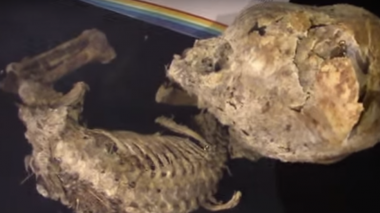 Reconstruyen cráneos alargados en Bolivia