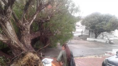 La caida de árboles ocasionó parte de la emergencia por energía de este lunes.