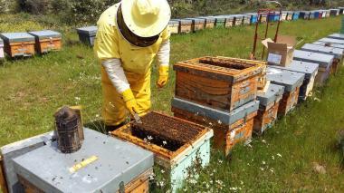 Con abejas ayudan a medir el nivel de contaminación del aire en Roma