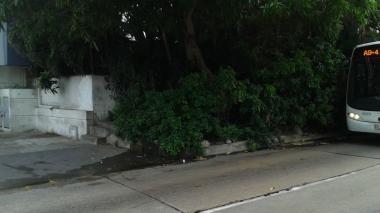 La casa 'selva' que preocupa  a vecinos en El Poblado