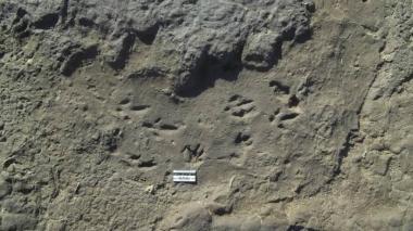 Descubren huellas fosilizadas de tigre dientes de sable en Argentina