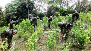 Duque espera reducir 140 mil hectáreas de coca en cuatro años