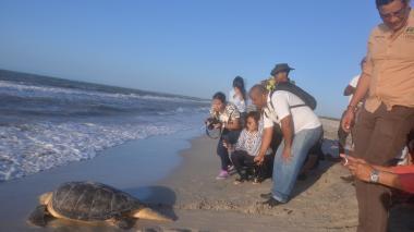 Tortuga salvada del sacrificio fue liberada en la playa de Riohacha
