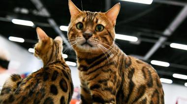 Policía británica descubre al asesino en serie de 400 gatos