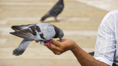 Polémica en Bogotá: alcalde prohíbe alimentar a palomas en la Plaza de Bolívar