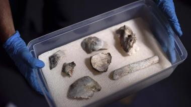En ruinas del Museo de Río hallan fósil de 12.000 años