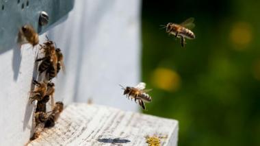 Juez ordena proteger abejas en Colombia ante amenaza de extinción