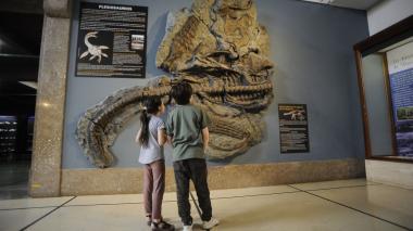 Presentan en Argentina réplica de un plesiosaurio, un reptil marino de hace 65 millones de años