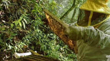En video | Uso de pesticidas amenaza la supervivencia de las abejas en Bolivia