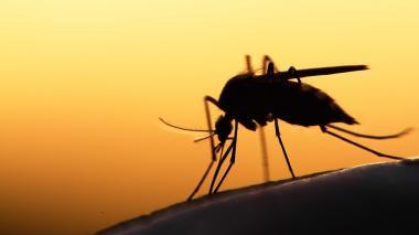 Reportan 8.109 casos de malaria en Montería