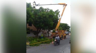 Electricaribe intensifica labores de poda ante daños por fuertes brisas