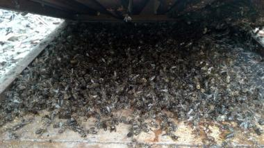 Más de 40 mil abejas envenenadas en Ciénaga de Oro