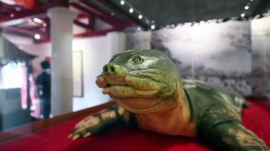Una tortuga sagrada embalsamada para la eternidad en Vietnam
