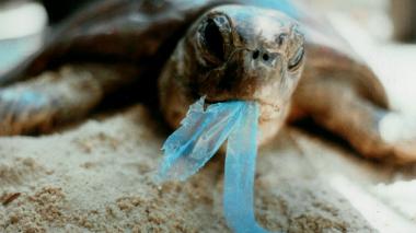 Causas y efectos de la contaminación de las playas