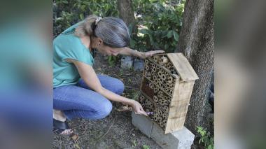Las abejas tienen cinco 'hoteles' en Santa Marta
