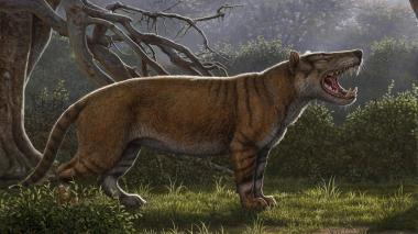 """Identifican el fósil del """"gran león africano"""""""