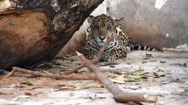El santuario de las especies en vía de extinción en Cesar