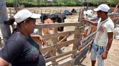 Alexandra Arrieta y su esposo, José Luis Mesa, junto a las cuatro vacas, luego de haber sido recuperadas.