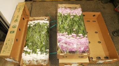Desde Santa Marta zarparon hacia Miami dos buques con 63 contenedores con flores