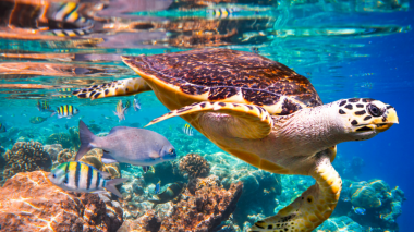 Una de cada 8 especies, en vía de extinción, alerta ONU