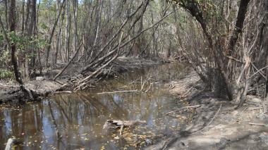 Predios recuperados por la SAE en Bahía Concha tienen daños ecológicos