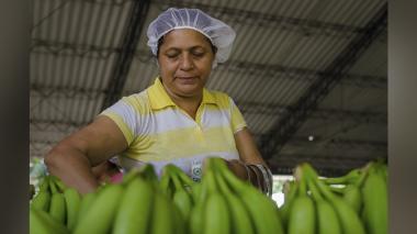 Bananeros del país se dan cita en Santa Marta